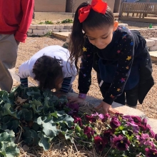 Pre K students test their five senses on flowers in the garden.
